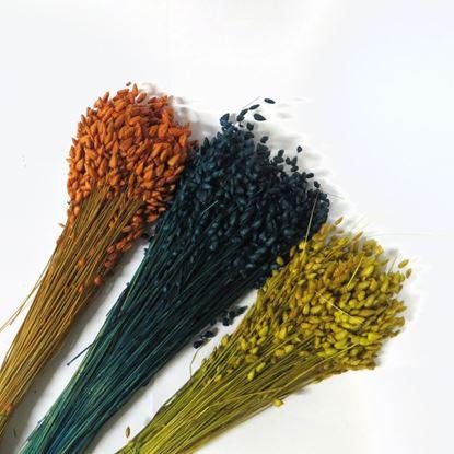 Obrázek Briza - barevná (svazek)