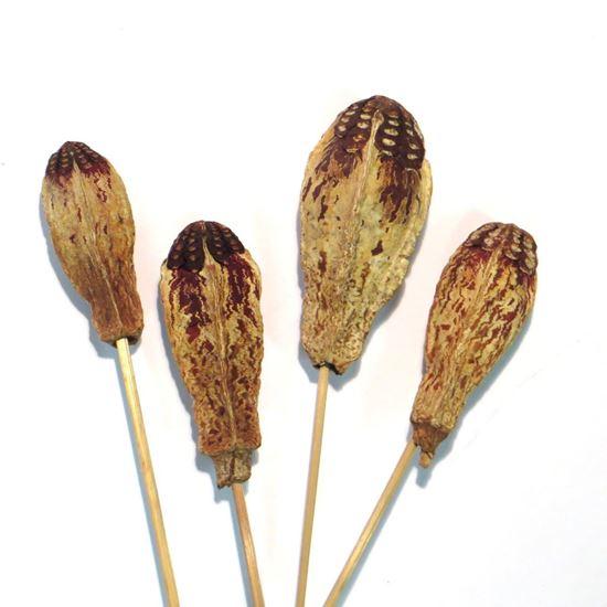 Picture of Mehogany - přírodní, na stonku (15ks)