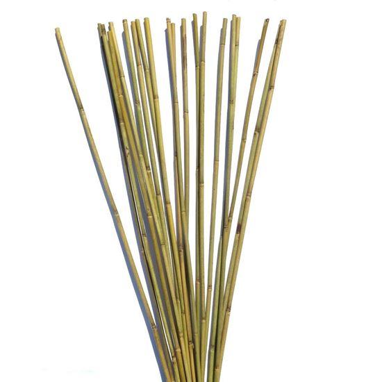 Obrázok z Tyč bambusová 120 cm, 10-12 mm
