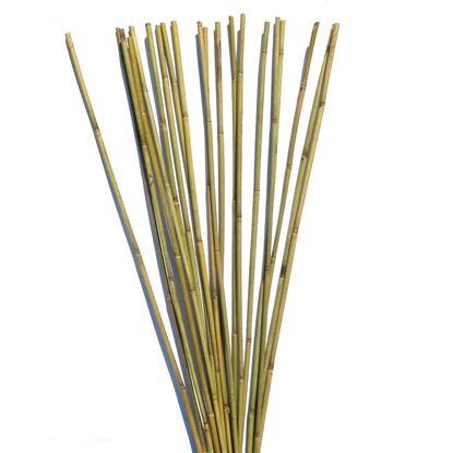 Obrázek Tyč bambusová 150 cm, 10-12 mm
