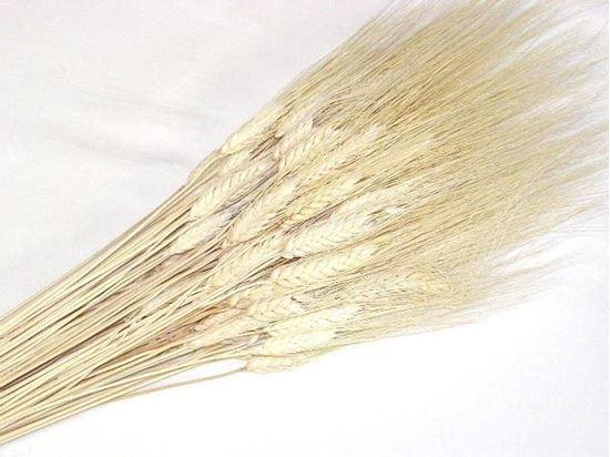 Obrázek z Grano triticum (pšenice) - bílá (svazek)