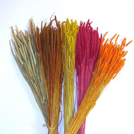 Picture of Phleum code - přírodní, barevné (svazek)