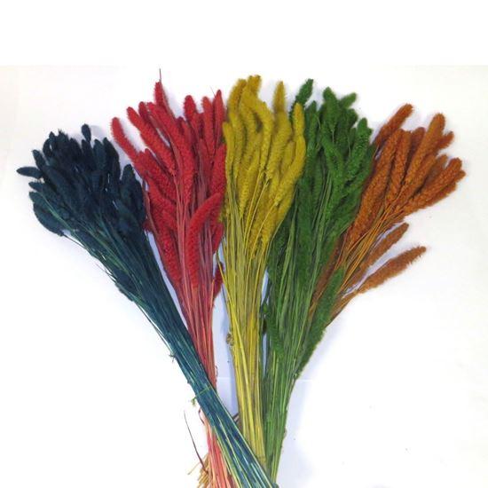 Obrázok z Setaria - farebná (zväzok)