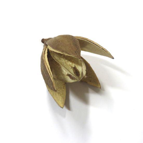 Picture of Wild lily - přírodní (20ks)