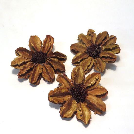 Obrázek z Arjun sunflower - přírodní (25ks)