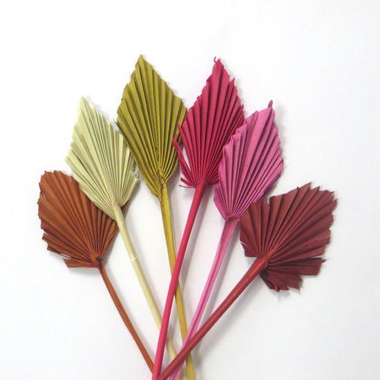 Obrázek z Palm spear small - barevný (10ks)