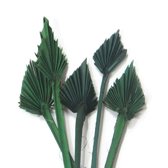 Obrázek z Palm spear mini - zelený (10ks)