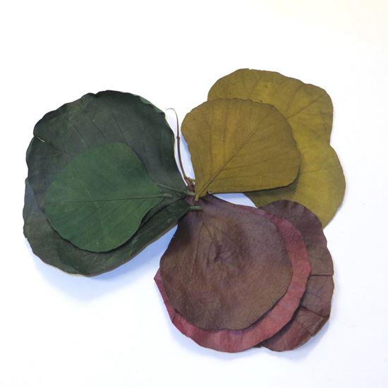 Picture of Cobra leaves - barevné (50ks)