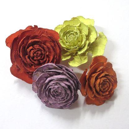 Obrázok z Cedar rose - farebná (25ks)