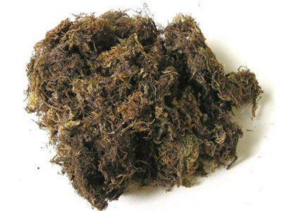 Obrázek z Mech - přírodní (0,1kg)