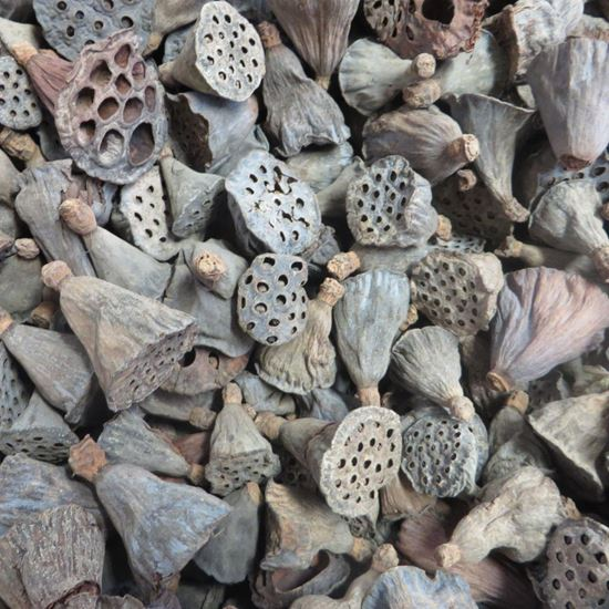 Obrázok z Lotus pod mini - prírodný (100ks)