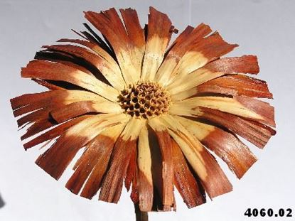 Obrázok z Protea supercut (5ks)