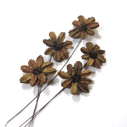 Obrázok z Arjun sunflower - prírodná, na stonke (15ks)